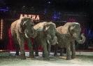 Elefanter i forestillingen 2 (til tryk)