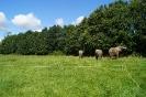 Elefanterne på fold ved cirkus 2