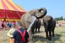 Elefantvask 1